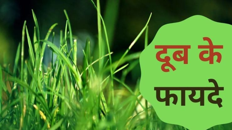 Doob Grass Health Benefits in Hindi
