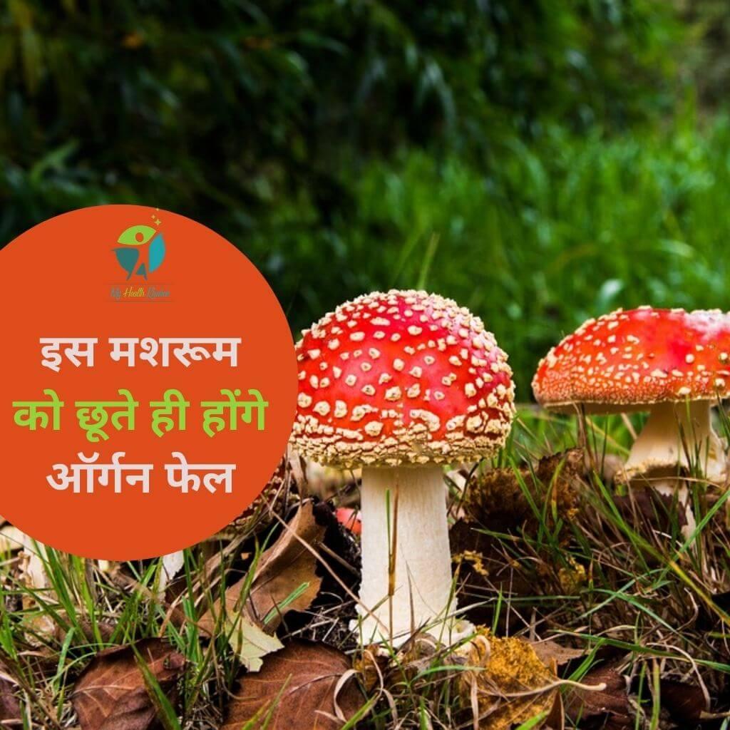 Harmful Mushroom